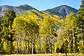 Lockett Meadow Sept 25, 2012 (8033732460).jpg