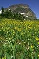 Logan Pass in springtime (4455585580).jpg
