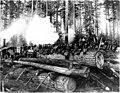 Logging camp crew posing on big fir logs at landing, Washington, 1908 (KINSEY 2765).jpeg