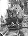 Logging crew and large log loaded onto flatbed railroad car, Clemons Logging Company, ca 1924 (KINSEY 110).jpg