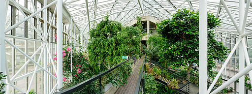 London Barbican conservatory Wikimania 2014 6602 pano 5