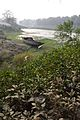 Lone Boat on Riverbank Churni - Halalpur Krishnapur - Nadia 2016-01-17 9047.JPG