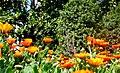 Lule ne Permet - panoramio (2).jpg