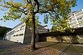 Luzern Dula-Schulhaus tree.jpg