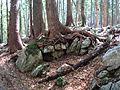 Märchenhafter Rothwald.jpg