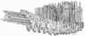 Ilustrasi yang menggambarkan formasi phalanx. Formasi phalanx merupakan bagian inti dalam pasukan Seleukia