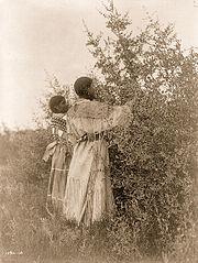EDWARD SHERIFF CURTIS LE PHOTOGRAPHE DES AMÉRINDIENS 180px-Mandan_girls_gathering_berries