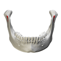 Mandibular notch - close-up - anterior view.png