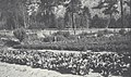Mark W. Marvin's garden at Atnarko (49630).jpg