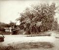 Martha Brae Bridge in Trelawny by Doctor James Johnston died 1921.jpg