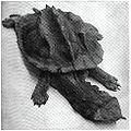Mata Mata 1911.jpg
