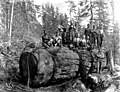 Men posed on large log, Snohomish County, ca 1911 (PICKETT 49).jpeg