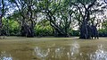 Mesmerizing view of Ratargul Swamp Forest.jpg