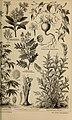 Meyers Konversations-Lexikon - eine Encyklopädie des allgemeinen Wissens (1890) (14592785368).jpg
