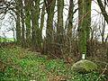 Mieleszyn, old evang. cemetery (8).JPG