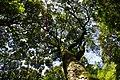 Miike Birds Forest - panoramio.jpg