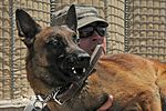 Military working dogs 110727-F-BQ124-005.jpg