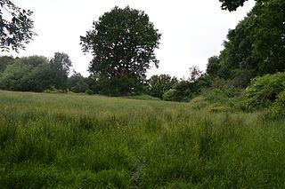 Mill Meadows, Billericay nature reserve in Billericay, Essex