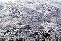 Misucho 5-chome, Fushimi Ward, Kyoto, Kyoto Prefecture 612-8233, Japan - panoramio (1).jpg