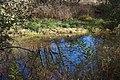 Montezuma Well - 26894016599.jpg