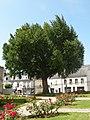 Montrichard - Ginkgo biloba 2011.jpg