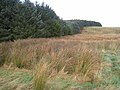 Moorland and plantation near Thorny Knowe - geograph.org.uk - 616428.jpg