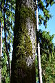Moss (15678954779).jpg