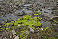 Moss in a Creekbed (9511528827).jpg