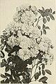 Mount Hope Nurseries established 1840 - general catalogue (1909) (14778400154).jpg