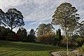 Mount Wilson NSW 2786, Australia - panoramio (3).jpg
