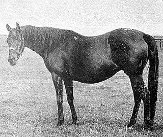 Mrs Butterwick British-bred Thoroughbred racehorse