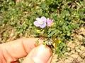 My small flower bouqute - panoramio.jpg