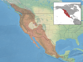 Myotis californicus distribution.png