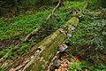 Národná prírodná rezervácia Stužica, Národný park Poloniny (20).jpg