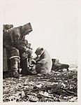 "NPRA3019. Roald Amundsen mater isbjørnungen ""Marie"" (28849593933).jpg"