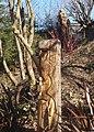 Naddiadau yng Ngerddi Tan-y-Coed - Carvings in Tan-y-Coed Gardens - geograph.org.uk - 1738530.jpg