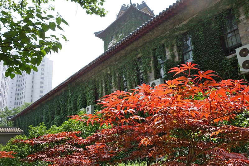 Nanjing uni vegetation.jpg