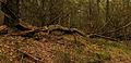 Nationaal Park Drents-Friese Wold. Locatie Dieverzand. Dode boom, belangrijke voedselbron in evenwichtig biotoop 04.jpg