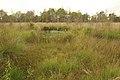 Nationaal park De Groote Peel 09.jpg