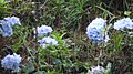 Natural Colour Flowers.jpg