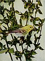 Nature neighbors, embracing birds, plants, animals, minerals, in natural colors by color photography, containing articles by Gerald Alan Abbott, Dr. Albert Schneider, William Kerr Higley...and other (14564162349).jpg