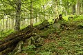 Nature reserve Žižkův vrch in summer 2012 (18).JPG