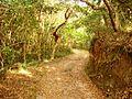 Nature trail, Shikinejima, Tokyo, Japan.JPG