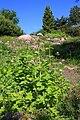 Neuer Botanischer Garten Marburg - 0014.jpg