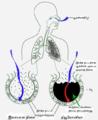 New Pneumonia cartoon-ta.png