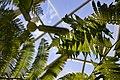 New York Botanical Garden, United States (Unsplash).jpg