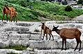 OPAL TERRACE with elks 1.jpg