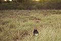 O Gato no pôr do sol!.jpg