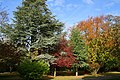 Oaks Park, London Borough of Sutton, colourful trees.jpg