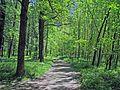 Oasi Naturale del Bosco Tenso di Premosello Chiovenda (Vb) 1.jpg